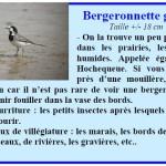 bergeronette